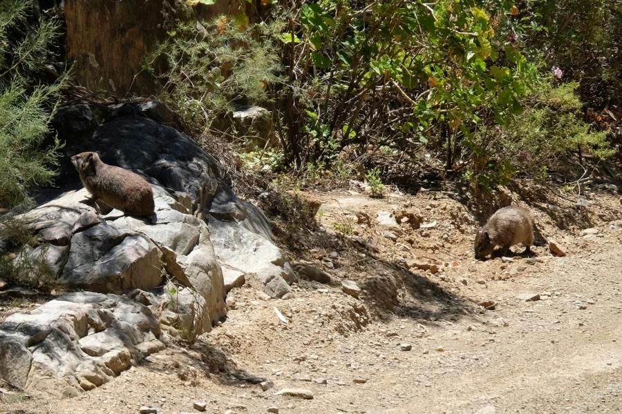 Tiere beim Swartberg Pass