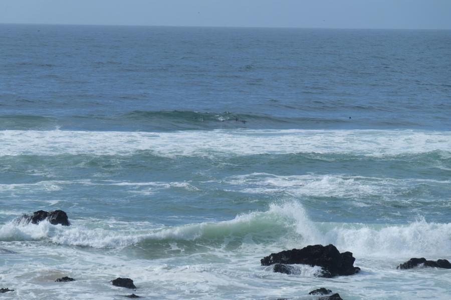 Küste mit Delfinen bei Keurboomstrand