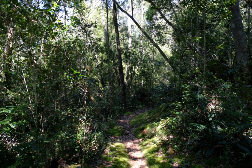 Im Goudveld Forest bei Knysna