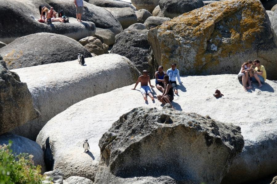 Menschen und Brillenpinguine bei Boulders Beach