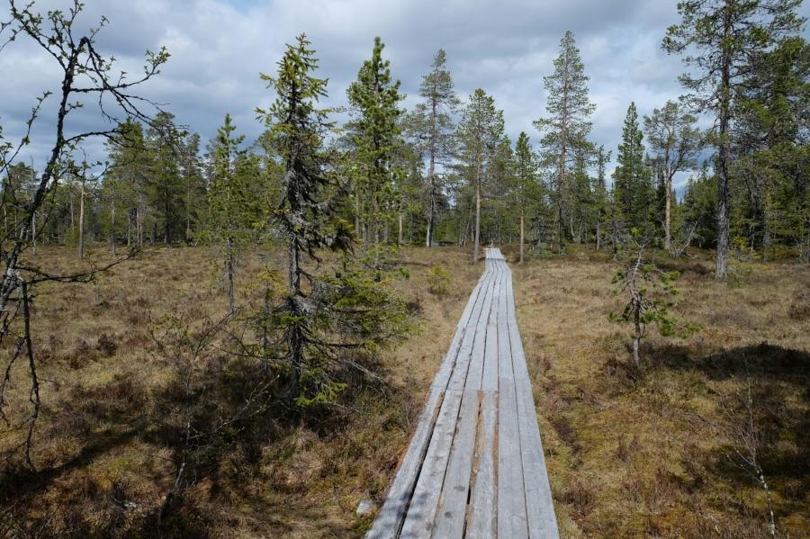 Weg im Fulufjäll Nationalpark