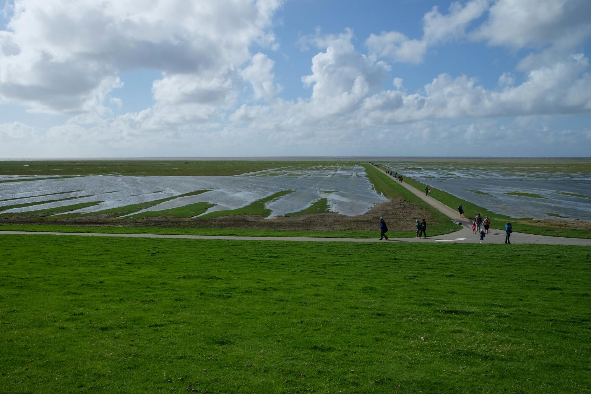 Salzwiesen beim Leuchtturm von Westerhever