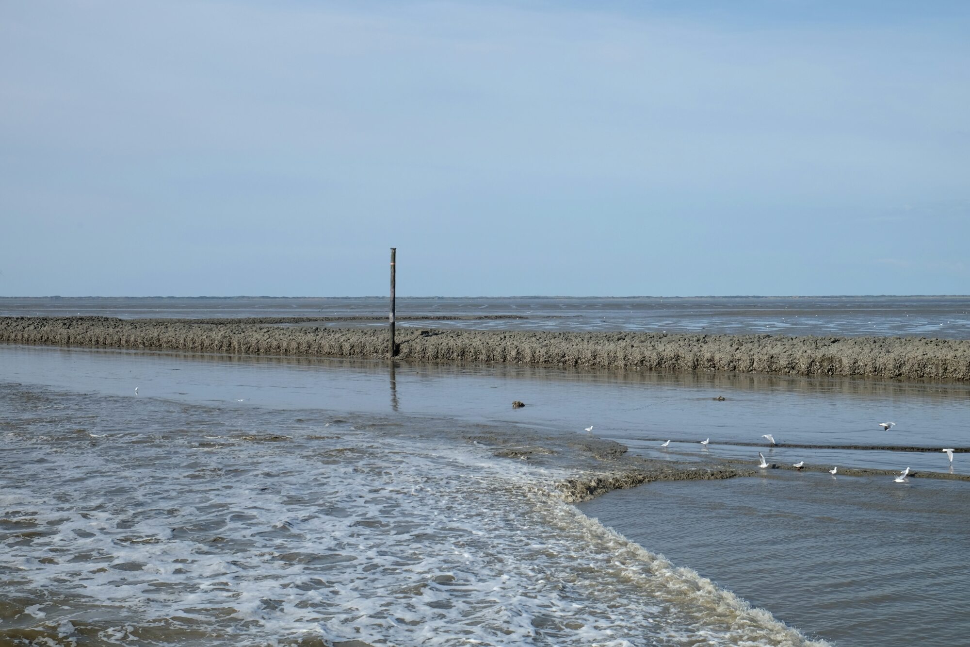 Niedrigwasser bei Bensersiel