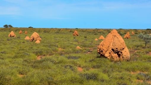 Termitenhügel bei Exmouth