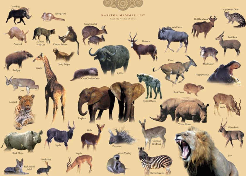 Wildlife Field Guide Big Game - Kariega Private Game Reserve