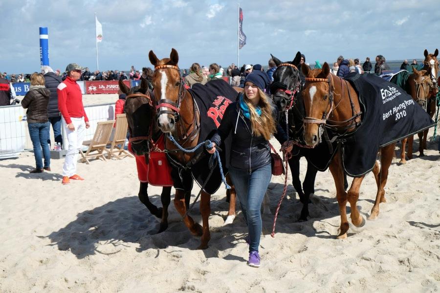 Ponys dürfen zurück zu den Boxen beim Beach Polo in Hörnum