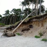 Umgefallener Baum am Darsser Weststrand