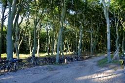 Fahrradparkplatz am Mittelweg des Darsser Weststrands