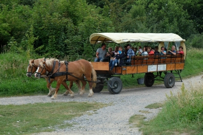 Mit der Pferdekutsche unterwegs am Kap Arkona