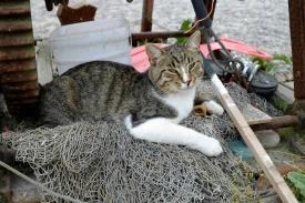 Hafenkatze in Vitt