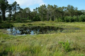 Teich in der Kærgård Klitplantage