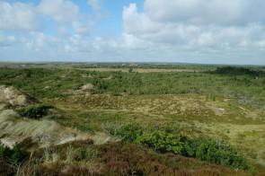 Blick über die Kærgård Klitplantage
