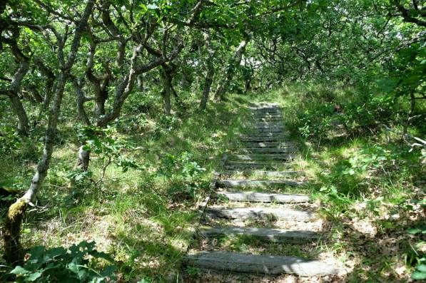 Treppen auf die Baumwipfel bei Kærgård