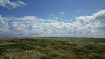 Heidelandschaft am Sylter Ellenbogen