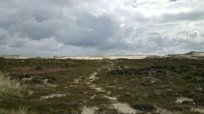 Wanderdünen im Sylter Listland
