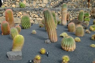Kakteen im Jardín de Cactus