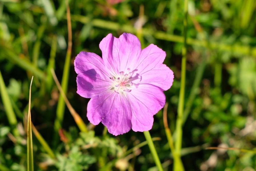 Blüte am Cap d'Erquy
