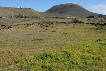 Blumenwiese bei Guinate