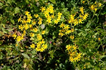 Blume in Blumenwiese im Hangtal von Guinate