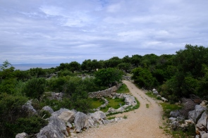 Olivengarten von Lun (Insel Pag)