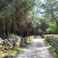 Weg bei Prniba