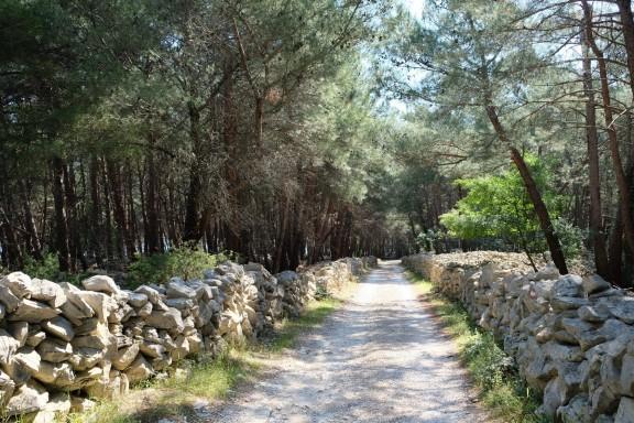 Weg durch den Kiefernwald bei Prniba
