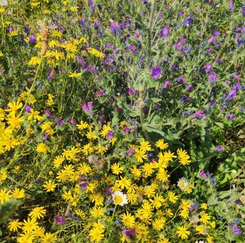 Blumen am Paradiesweg