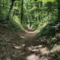 Steil bergab zum Rhein
