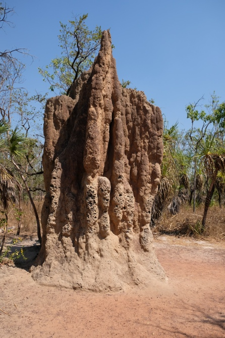 Cathedral Termite Mound (Litchfield NP)