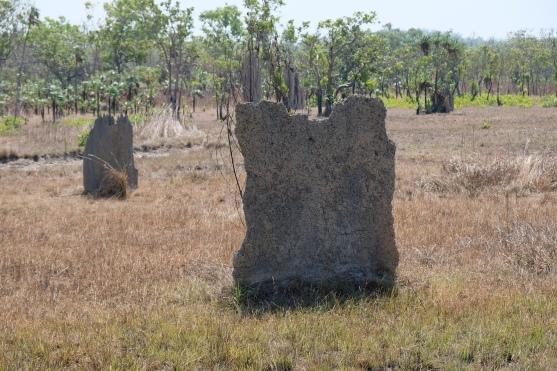 Magnetische Termitenhügel (Litchfield NP)