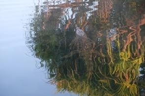 Krokodil im Yellow Water