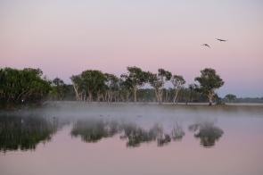 Morgenstimmung am Yellow Water