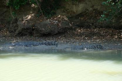 Krokodile am East Alligator River (Kakadu NP)
