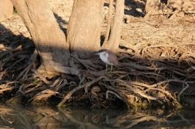 Wasservogel am Yellow Water
