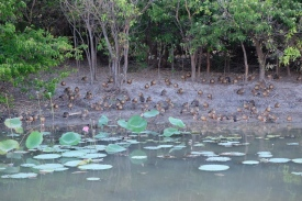 Vögel am Yellow Water