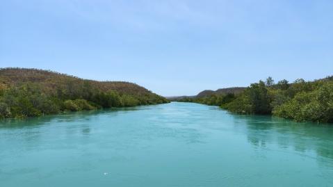 Mangroven (an der Küste vor Koolan Island)