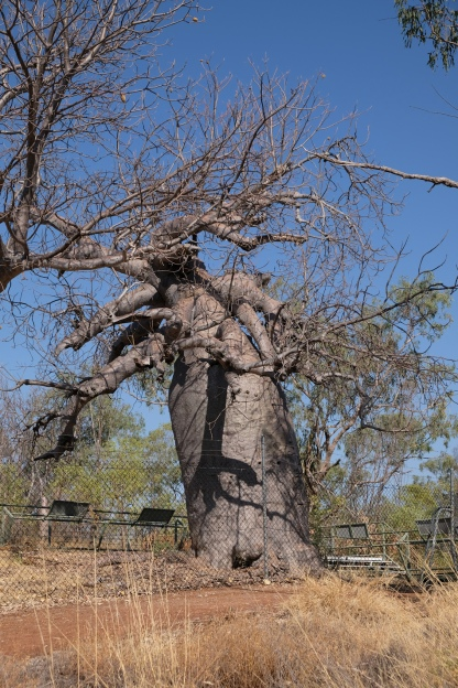 Gregory's Tree