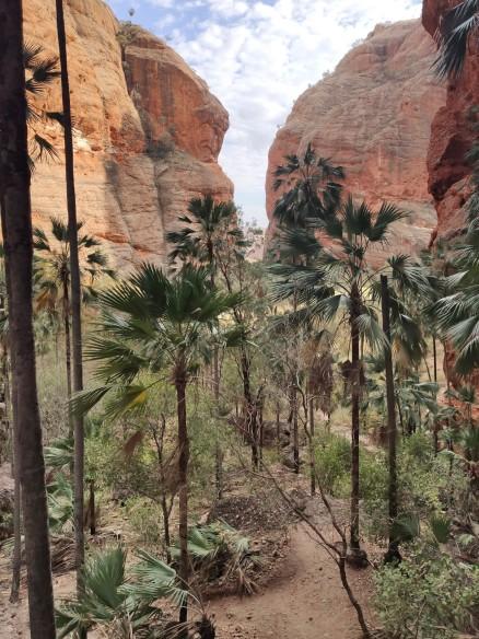 Mini Palms Gorge (Purnululu NP)