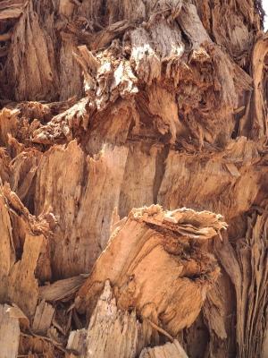 Rumpf eines Boab Trees (Jackaroo's Waterhole)
