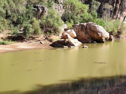Süsswasserkrokodile in der Bandilgan Gorge