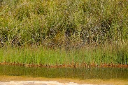 Sehr viel Grün in der Kalamina Gorge
