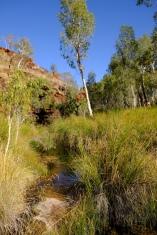 Viel Grün in der Kalamina Gorge