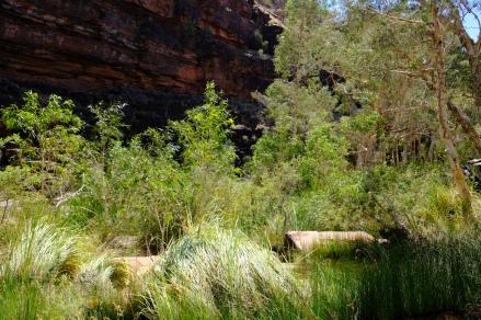 Viel Grün in der Dales Gorge