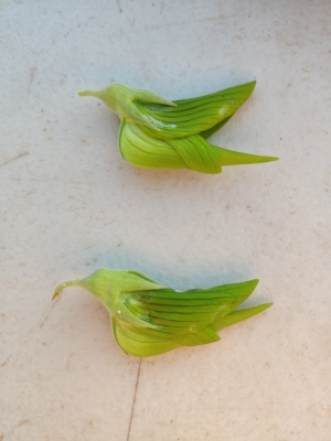 Green Birdflower (Crotalaria cunninghamii)