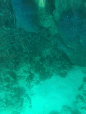 Korallen des Ningaloo Reef (Glass Bottom Boat)