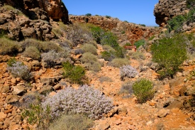 Yardie Creek Trail