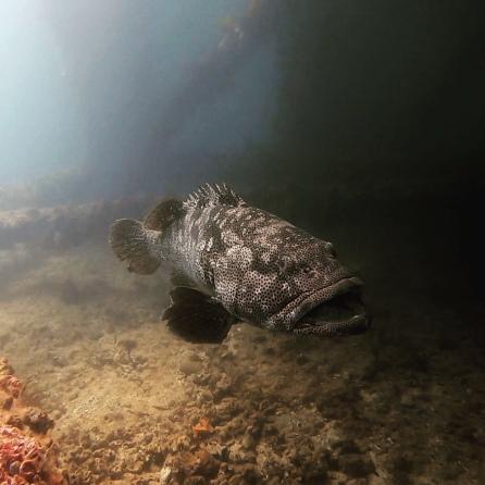 Fisch (Ningaloo Reef)