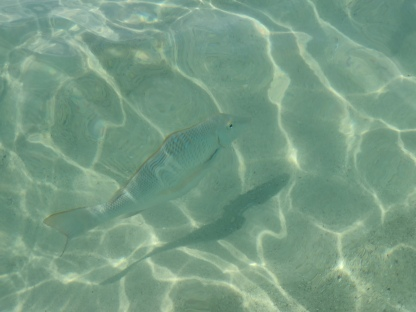 Fisch am Strand (Turquoise Bay)