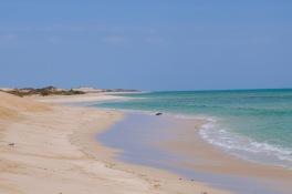 Schildkröte am Strand (Jurabi Coastal Park)