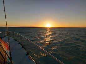 Shark Bay Evening Cruise